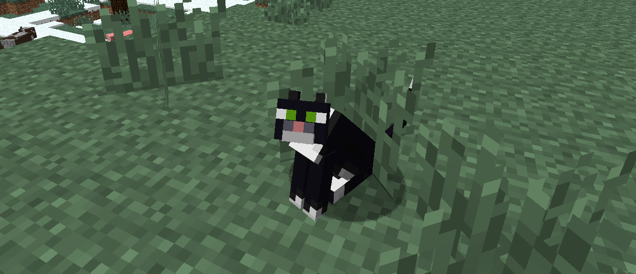 How To Tame A Cat In Minecraft Pe | Best Cat Cute Pictures, Meme